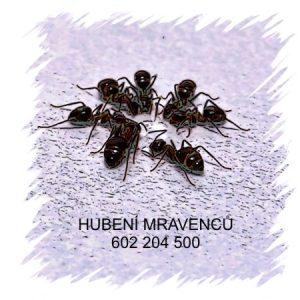 Hubení mravenců Praha jak vyhubit mravence