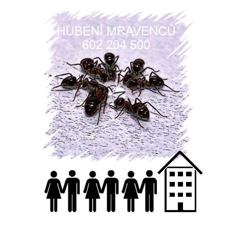 Jak vyhubit mravence Praha