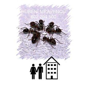 Hubení mravenců Praha likvidace