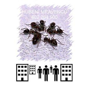 Hubení mravenců v kanceláři skladu prodejně