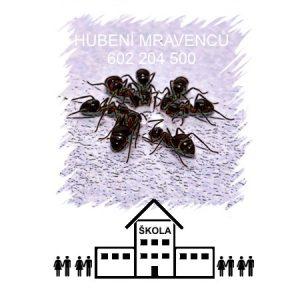 Hubení a likvidace mravenců ve škole, školce a školní jídelně