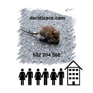 Hubení potkanů likvidace bytový dům Praha ceník
