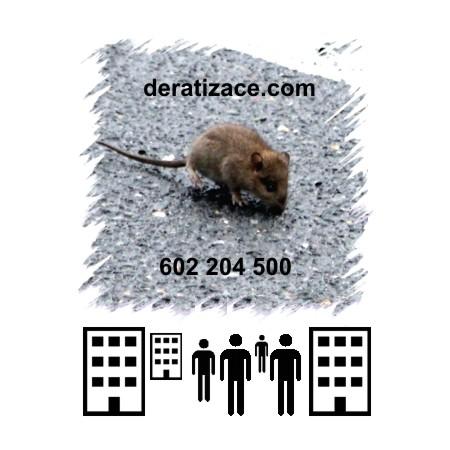 Hubení potkanů likvidace Praha ceník
