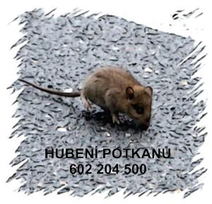Jak vyhubit potkany likvidace ceník Praha