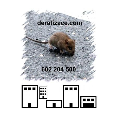 Hubení potkanů likvidace sklady provozovny Praha ceník
