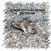Hubení potkanů deratizace likvidace Praha